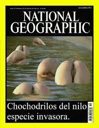 Nueva especie invasora: Chochodrilos en el Nilo