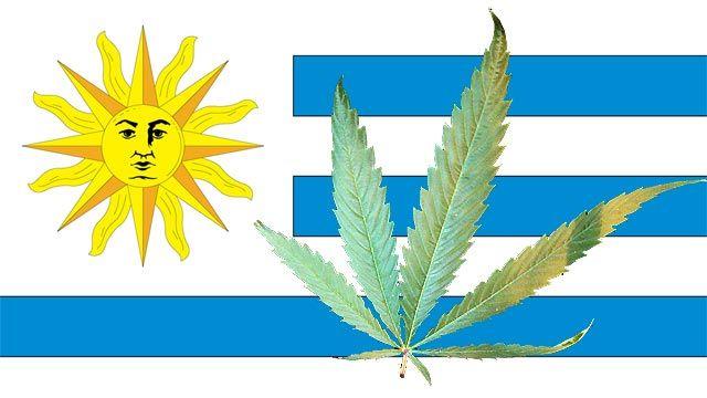 uruguay-legaliza-la-marihuana