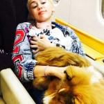 La cerda de Miley Cyrus