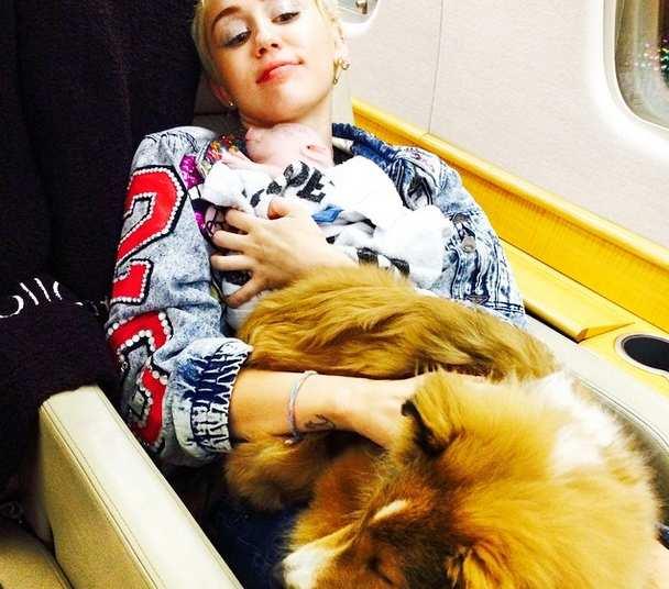 Cerdito Miley Cyrus